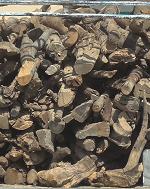 قاچاق چوب با آمبولانس در کهگیلویه وبویراحمد هم تایید شد
