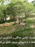 دادستان مرکز استان خبرداد؛ ارسال پرونده قطع درختان بلوط در منطقه مختار به دادگاه کیفری ۲ مرکز استان