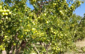 آمادهباش تعاون روستایی کهگیلویه وبویراحمد  برای خرید محصولات کشاورزی
